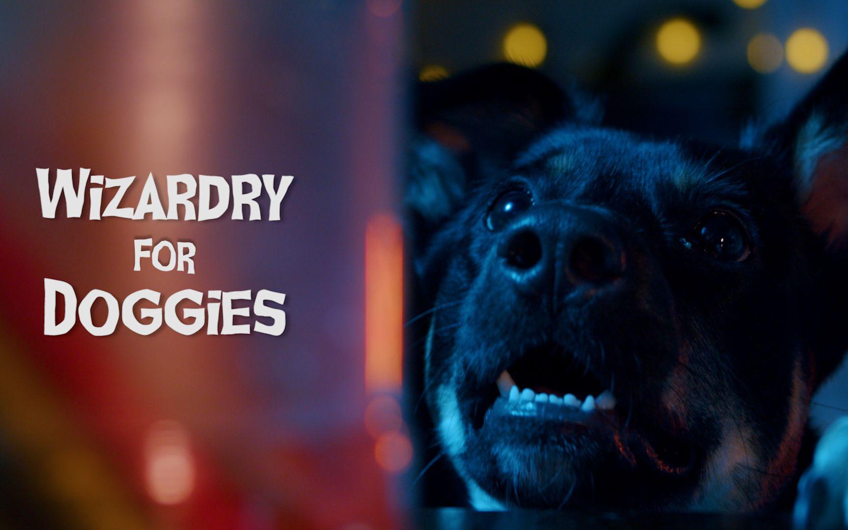 My RØDE Reel 2020 | Wizardry For Doggies