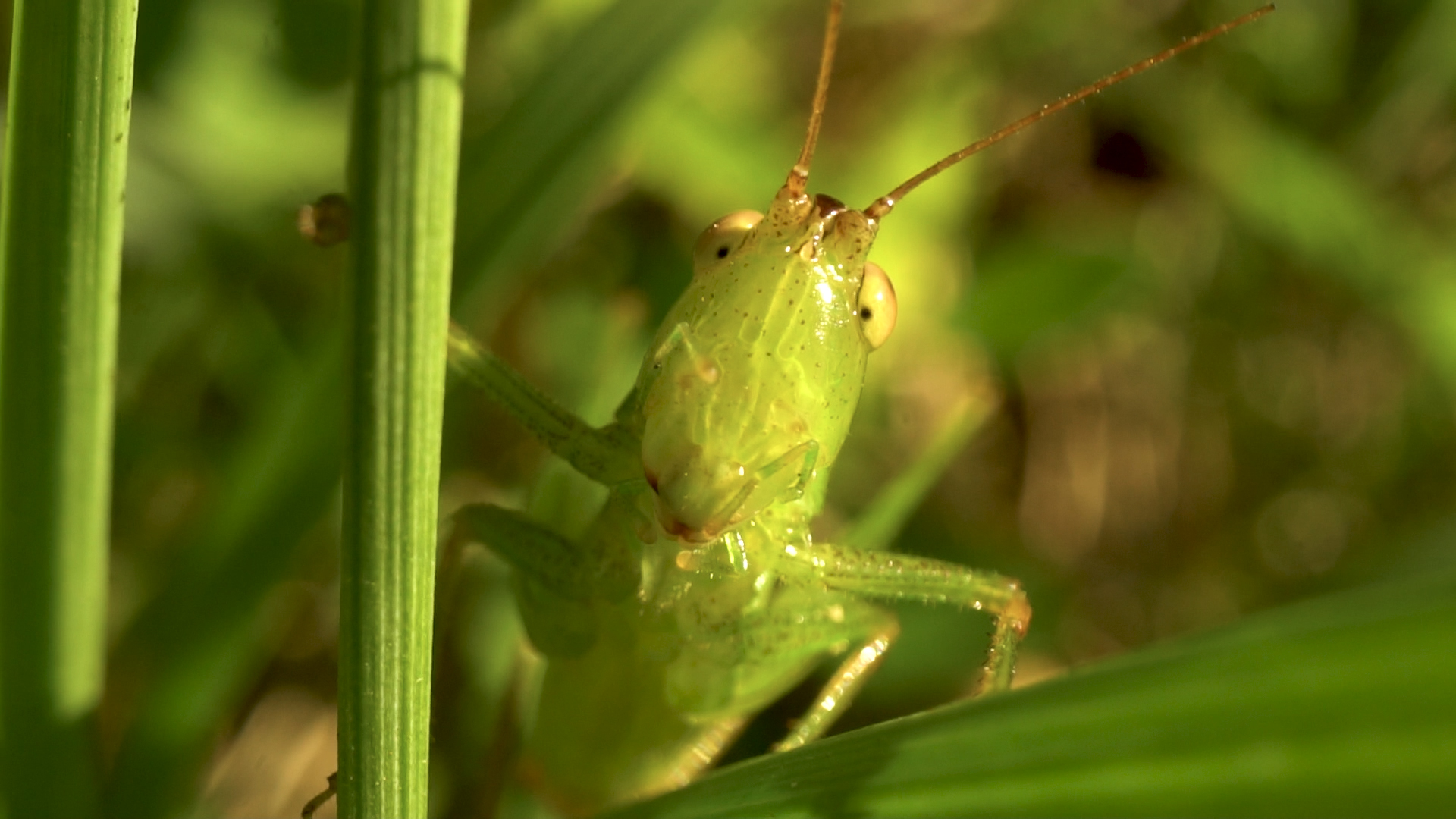 Bug Music: Summer Symphony (My RØDE Reel 2020)