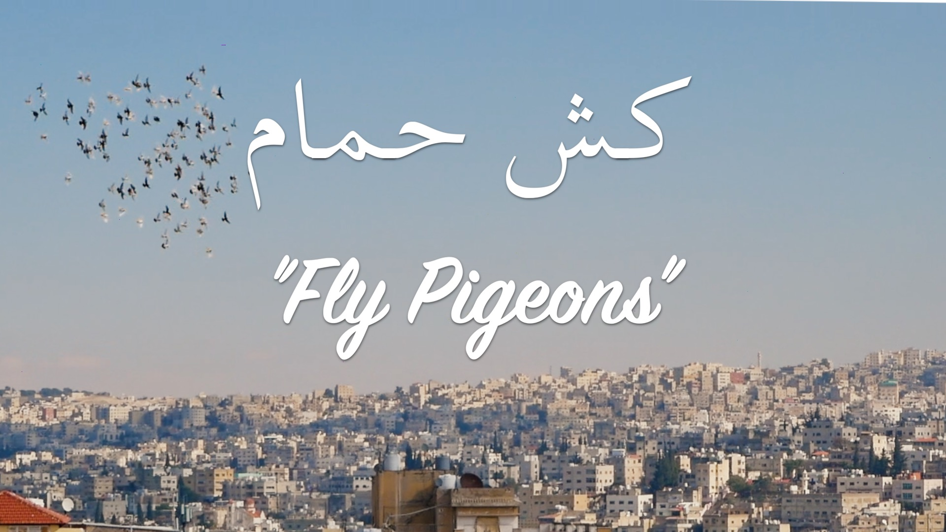 """""""Fly Pigeons""""   My Rode Reel 2020 Documentary"""