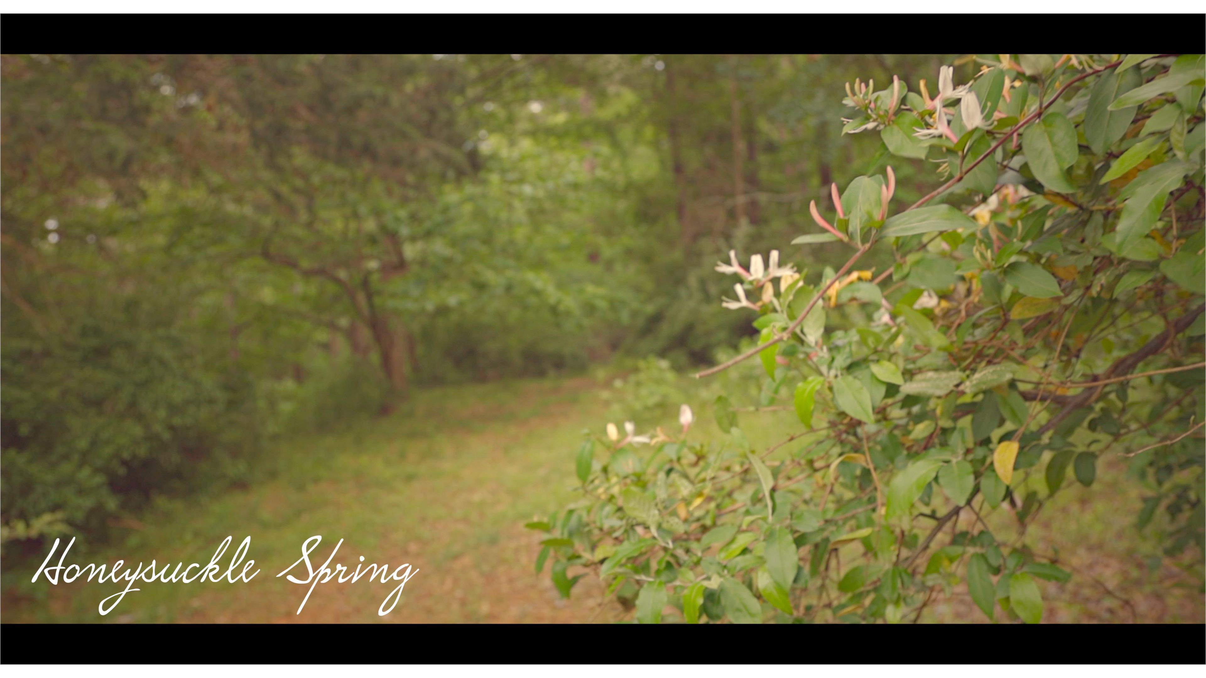 Honeysuckle Spring || My Rode Reel 2020