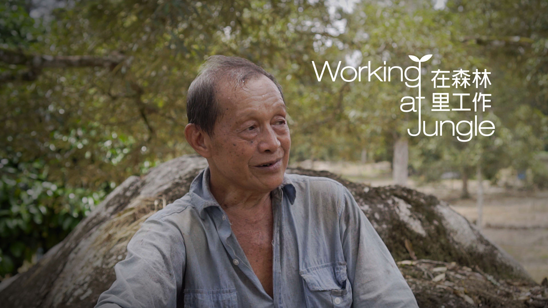 Working at Jungle Documentary | My Rode Reel 2020