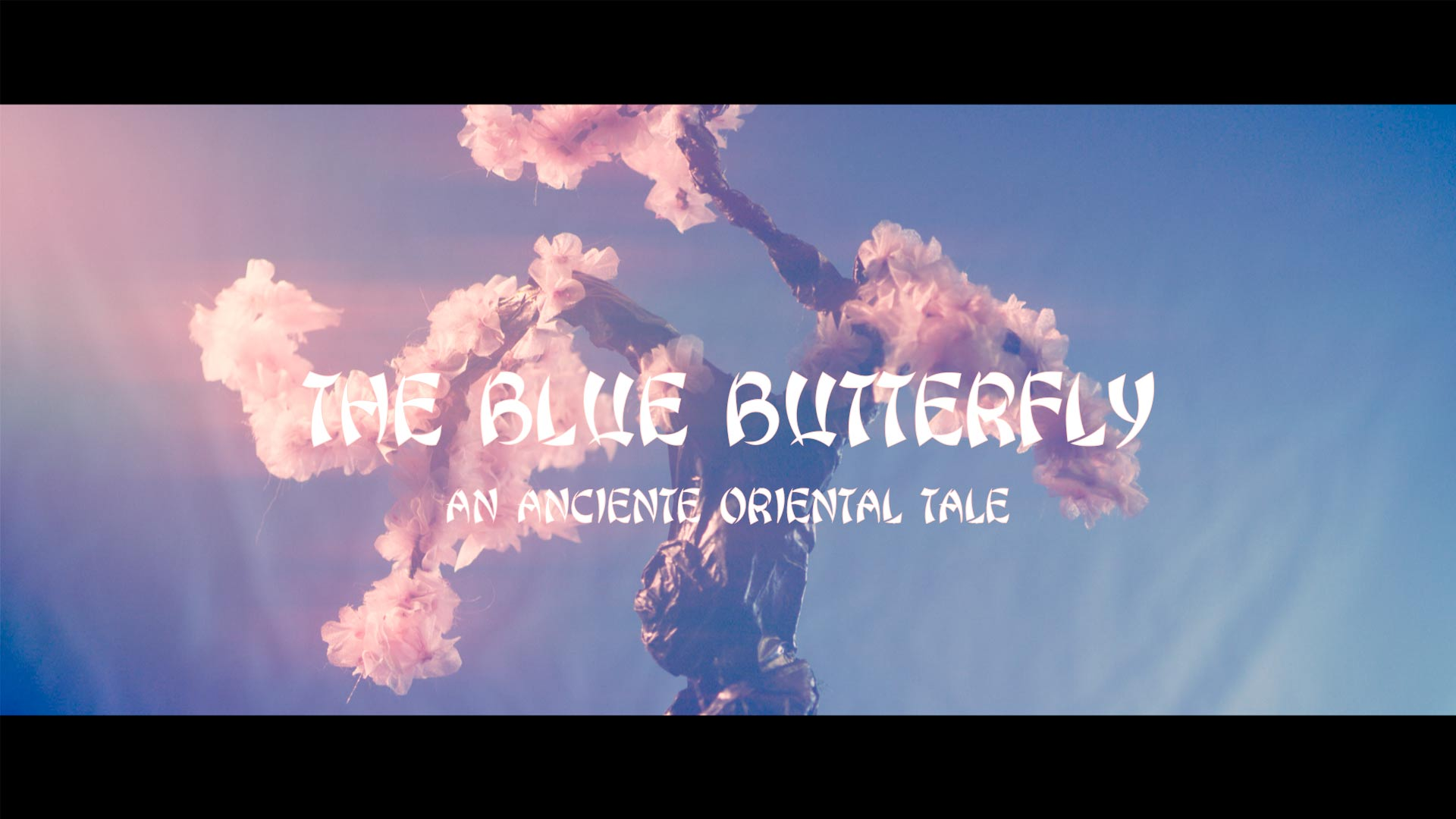 The Blue Butterfly MRR 2020