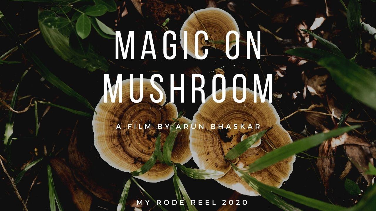 Magic on Mushroom - My RØDE Reel 2020